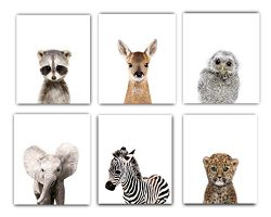 Nursery Decor Pictures (8×10) | Set of 6 (Unframed) Cute Baby Animal Photography Wall Print ...